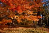 Corinth Autumn