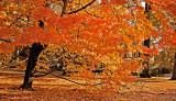 An Autumn Scene