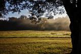 Early Autumn Fog