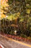Web in Fog
