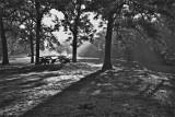 Fog at Shiloh