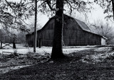 Barn in the Woods