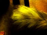thursday challenge - fur.jpg