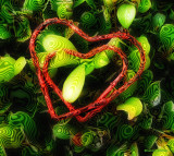 hearts are everywhere.jpg
