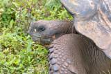 Galapagos-SDIM0264.jpg