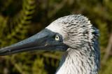 Galapagos-SDIM0301.jpg