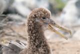 Galapagos-SDIM0687.jpg