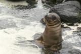 Galapagos-SDIM0831.jpg