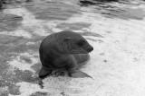 Galapagos-SDIM0848.jpg