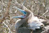 Galapagos-SDIM8505.jpg