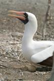 Galapagos-SDIM8646.jpg