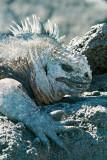 Galapagos-SDIM9227.jpg