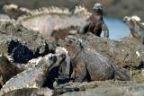 Galapagos-SDIM9243.jpg
