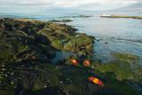 Galapagos-SDIM9317.jpg