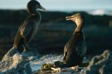 Galapagos-SDIM9392.jpg
