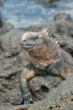 Galapagos-SDIM9592.jpg