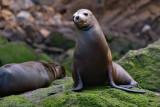 Galapagos-SDIM9691.jpg