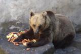 Feeding the bears at Cesky Krumlov