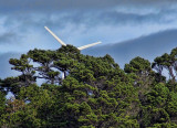 Brooklyn wind turbine from Karori Sanctuary