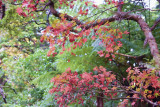 12 May 2010 - autumn colours showing