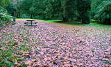 Damp Autumn Days at the Park