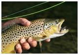 August 15, 2008 --- Prairie Creek, Alberta