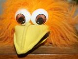 2009-01-26 Bird