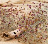 Desert Still Life (CA)