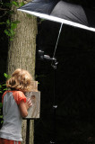 Wren nest photo setup