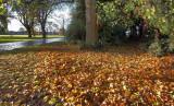 East Park autumn002.jpg