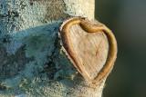 Heart of theTree