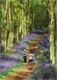 Ashridge bluebell woods