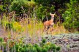 Quogue Wetlands Preserve
