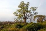 Cedarmere