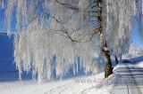 Rauhreif / Hoar Frost (91234)