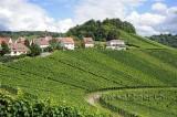 Rotenberg (98445)
