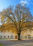 Hof mit Baum (78753)