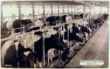 1940 - Dr. John G. DuPuis' White Belt Dairy Farms