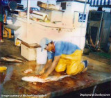 1987 - Michael Kandrashoff cleaning amberjack on the Watson Island docks