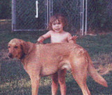 Purebred Dogs - no one owned one, we all had mixed breeds and they were fine dogs