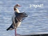 Un oiseau très poli