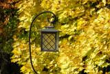 Fall Colors 2007 ... Nikon P5000