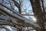 January And February Snow Fall In Blue Ridge Georgia