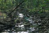 Pine Log WMA Trip