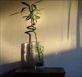 Bamboo and shadows