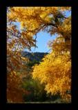 Fall Color 2.jpg