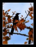 The Raven 1.jpg