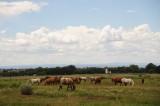 Taos Horses.JPG
