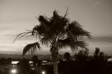 Palm at Dusk