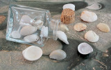 Whitish Shells From Carolina